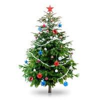 Fresh-Cut Christmas Trees