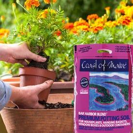 Coast of Maine BAR HARBOR 1CF Organic Potting Soil, Dark Brown, 1 cu-ft Bag