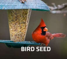 Bird Seed and Feeders