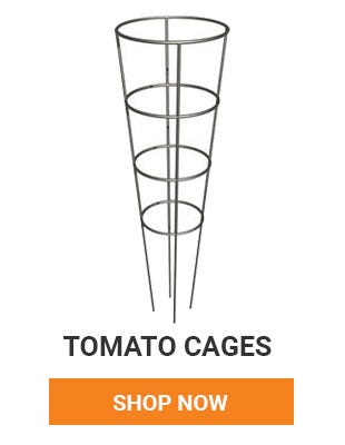 Help your tomato plants rise up with tomato cages. Shop Now.