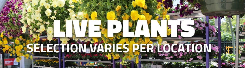 We have Live Plants. Selection varies per location.