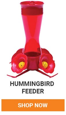 We have a variety of Hummingbird feeders. Pick one up today.