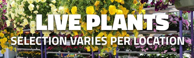 We have a variety of live plants to choose from. Visit your local store today.
