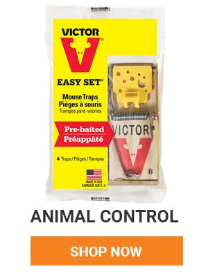 Have unwanted house guest? We have many animal control products to help you get rid of them. Shop Now.